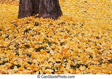 葉, 落ちている, ginko, 黄色