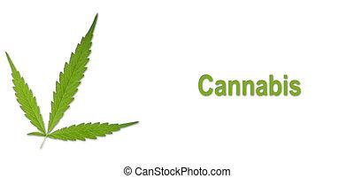 葉, 隔離された, インド大麻, 明るい, 緑, sativa