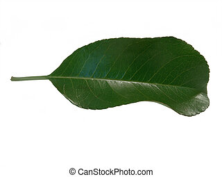 葉, 隔離された