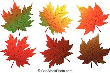 葉, 隔離された, 秋, ベクトル, 背景, 白, かえで