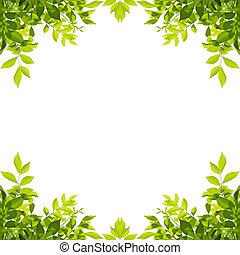 葉, 隔離された, 緑の背景, 白, フレーム