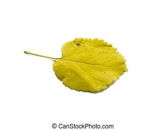 葉, 隔離しなさい, 隔離された, 黄色, バックグラウンド。, 白