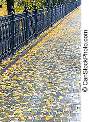葉, 雨 の後, 秋, 舗装, 黄色, ぬれた