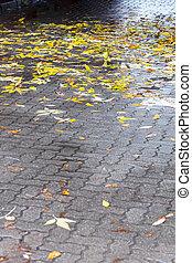 葉, 雨 の後, 黄色, ぬれた, 歩道