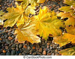 葉, 黄色