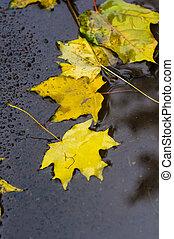 葉, 黄色, 秋, 雨, 水たまり, かえで