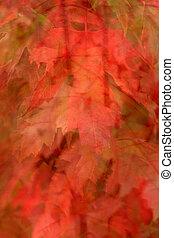 葉, 3, 秋