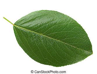 葉, crerry