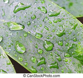 葉, draindrops