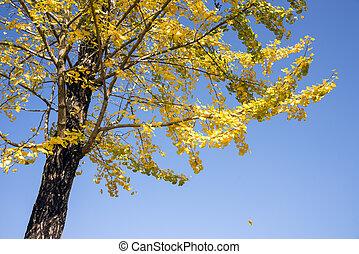 葉, ginko, 黄色