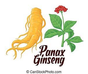 葉, plants., ベクトル, lifestyle., 伝統的である, 薬効がある, 薬, 根, additives, panax, イラスト, are., カラフルである, 生物学である, 健康, gardening., 平ら, ginseng.