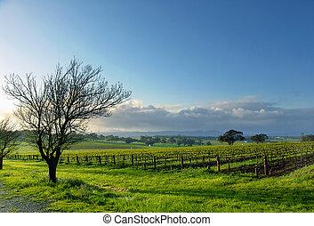 葡萄园, 风景