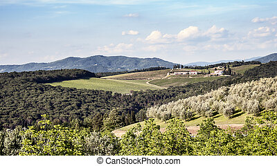 葡萄園, 以及, 橄欖, 小樹林, 在, tuscany