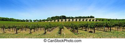 葡萄園, 全景