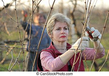 葡萄園, 農業, 剪除