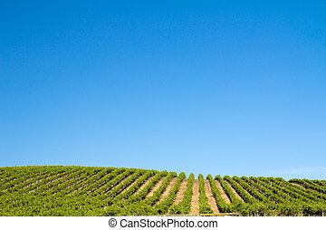 葡萄園, 領域
