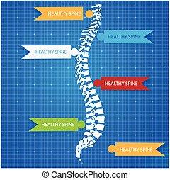 蓝图, 脊椎, 军医, 人类