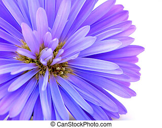 蓝的玉米, 花