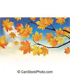 蓝色树叶, 天空, clouds., 落下, 前面