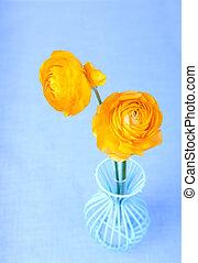 蓝色, 三, 瓶, ranunculus, 单一, 花