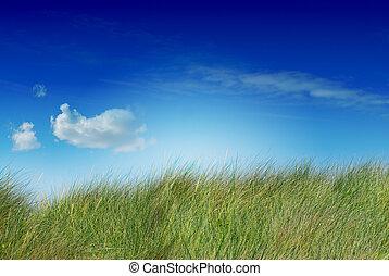 蓝色, 饱和, 边, 形象, 天空, 一, uncutted, 绿色, 高的草, 云, 左边左
