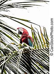 蓝色, closeup, 黄色, macaw