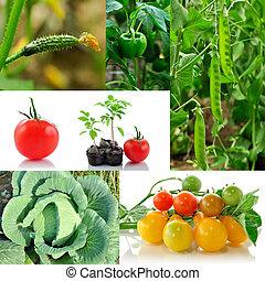 蔬菜, 拼贴艺术