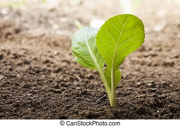 蔬菜, 生長, 在外, ......的, 土壤