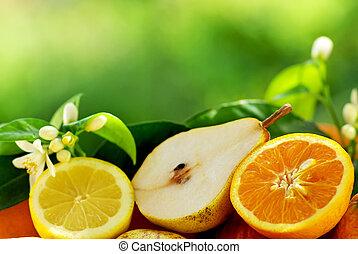 薄く切られる, ナシ, そして, 柑橘類, fruits.