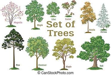 薮, 植物, セット, 木