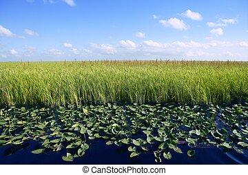 藍色的天空, 在, 佛羅里達, 沼澤地, 沼澤地, 綠色, 植物, 地平線, 自然