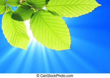 藍色的天空, 葉子