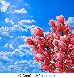 藍色的天空, 針對, 蘭花