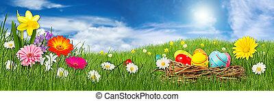 藍色的花, 草地, 鮮艷, 全景, 蛋, 天空, 綠色, 前面, 草, 復活節