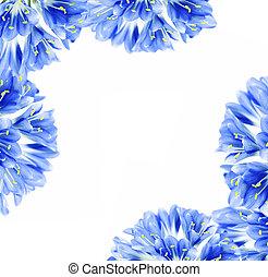 藍色的花, 邊框