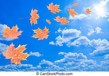 藍色的葉子, 飛行, 天空, 針對, 秋天