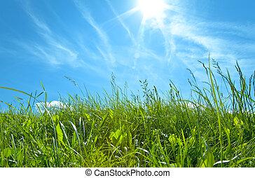 藍色, 云霧, 天空, 綠色白色, 草