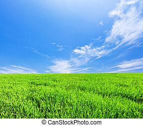 藍色, 天空, 多雲, 領域, 綠色, 在下面