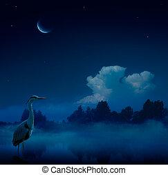 藍色, 幻想, 藝術, 背景, 夜晚