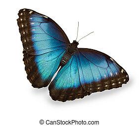 藍色, 蝴蝶, 白色, 被隔离