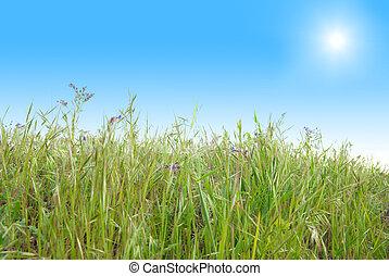 藍色, 陽光普照, 草, 天空, 綠色