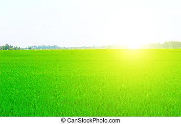 藍色, 領域, 天空, 綠色, 在下面