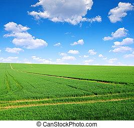 藍色, 領域, sky., 綠色