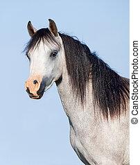 藍色, 馬, 黑色, 鬃毛, 背景, 白色