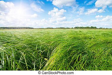 藍色, sky., 太陽, 領域, 綠色的森林, 在下面, 草, 正午
