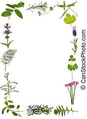 藥草, 花, 以及, 葉子, 邊框