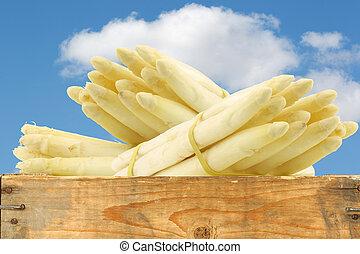 蘆筍, 收穫, 白色, 新鮮地