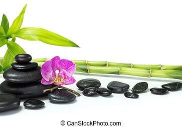 蘭, 紫色, 竹, 多数