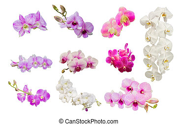 蘭, 背景, 美しい, 白い花