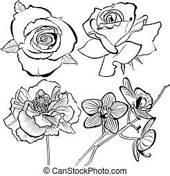 蘭, 花, バラ, ケシ